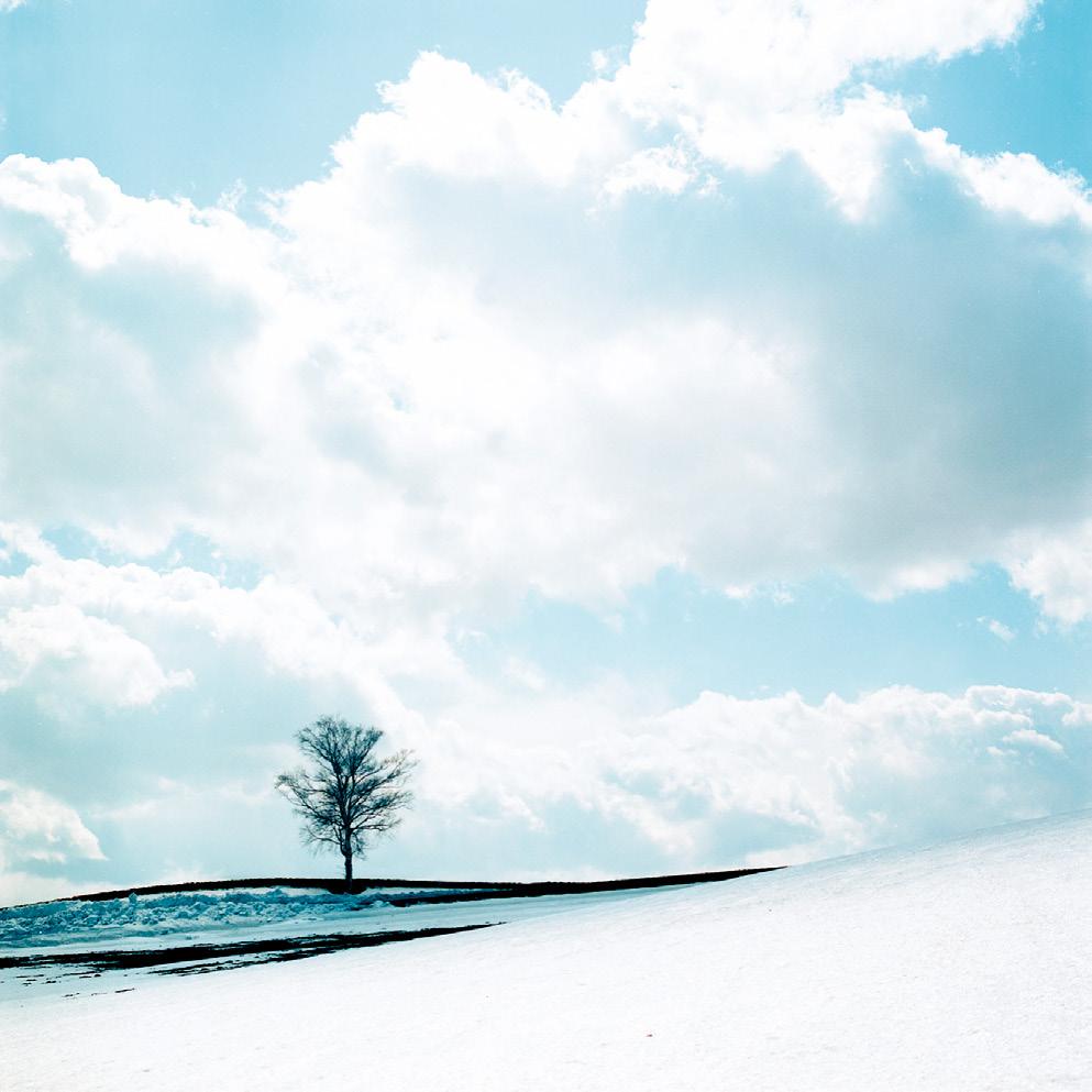 「木」は特別なシチュエーションを見つけて非日常感を演出しよう