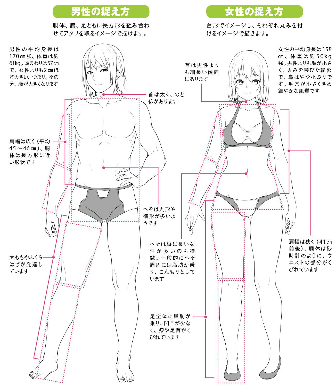 する 肩幅 を 方法 狭く 肩幅狭く、絶壁治療、性別適合手術