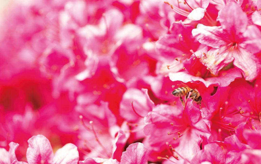 花を引き立て、画面を引き締める「蜂」の撮り方