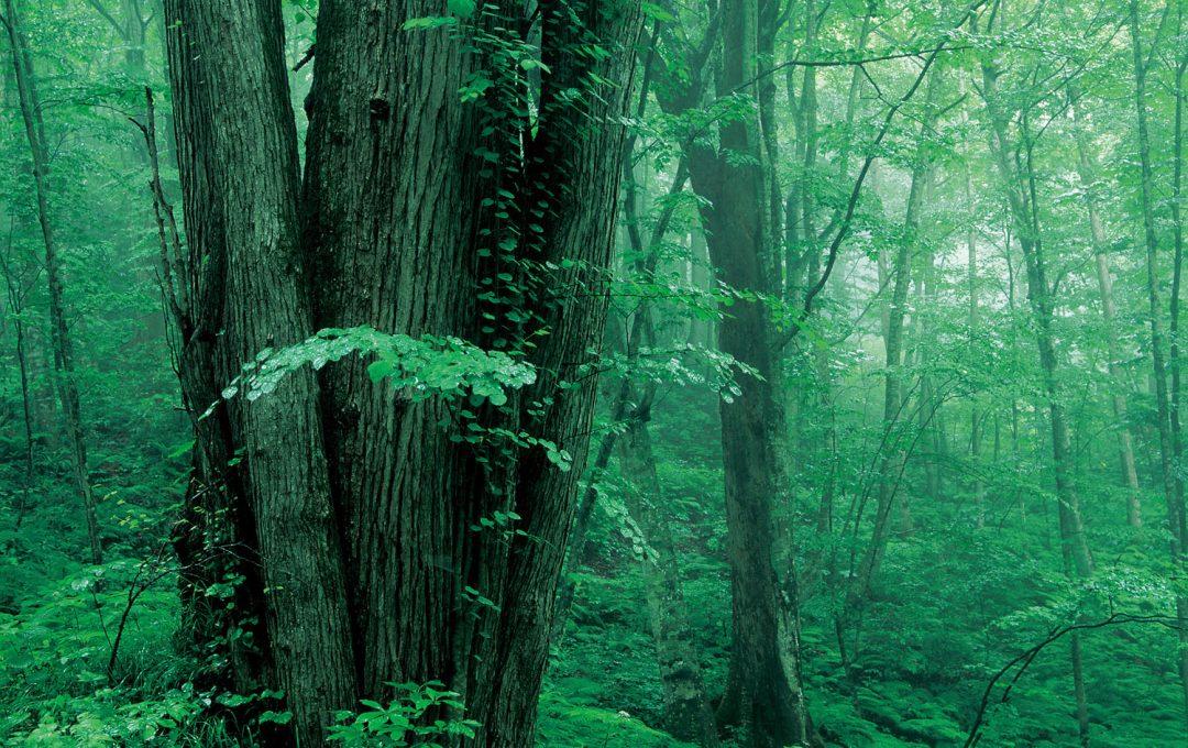 テクニックではない!森の撮り方の極意〜木々と対話し、森とリズムを合わせる〜