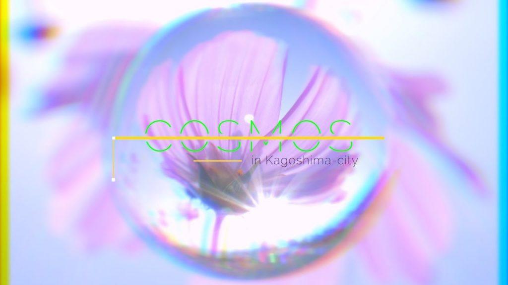 スピード感溢れる編集でコスモスを魅せる映像作品『秋桜-COSMOS- 』