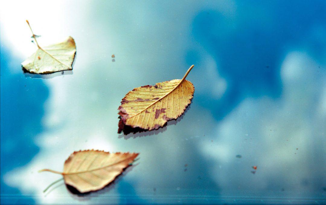 「落ち葉」が舞い落ちるシチュエーションも作品の一要素