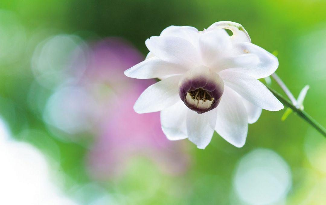 アンダーめに写した花の明るさを持ち上げて「可憐さ」「透明感」を蘇らせる