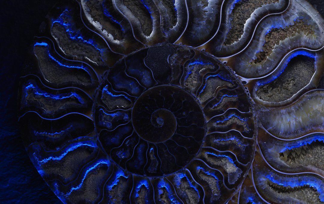 Photo Worksとしてアンモナイトの化石を撮る