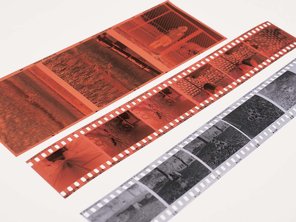 フィルムカメラ初心者へのアドバイス〜撮ったフィルムは寝かせず早めに現像へ出そう〜