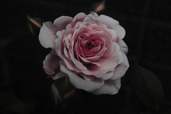 笠井爾示(かさいちかし)写真展「今日みかけた花 2020.4.7-5.25」 神保町画廊